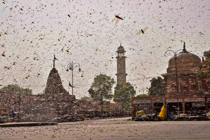 Locust invasion puts summer crop in many states at risk