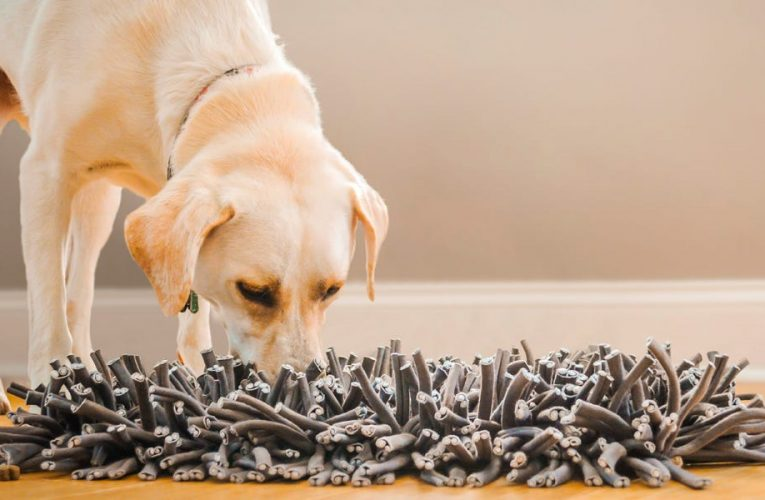 This snuffle mat mimics grass so dogs can hunt for treats and kibble — I use it to tire out my dogs on rainy days inside