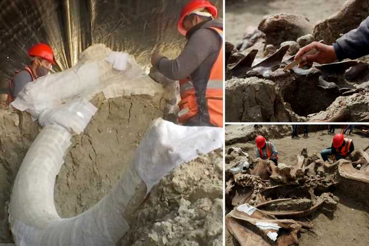 Eerie mammoth graveyard with HUNDREDS of bones belonging to 14-foot Ice Age beasts discovered