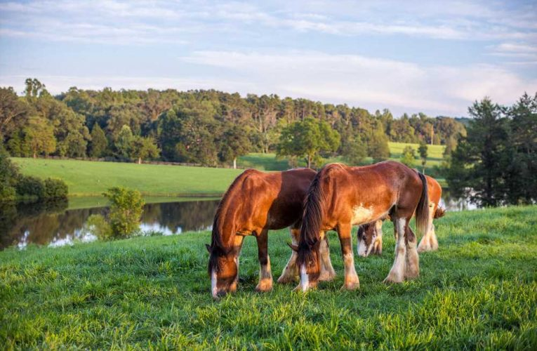 $75M estate comes with iconic Budweiser Clydesdales