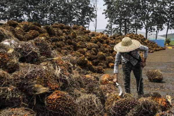 Palm Oil Farmers Say U.S. Ban to Hurt More Than 32,000 Planters
