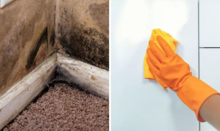 How to get rid of mould: Why you should NEVER use bleach on mould