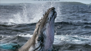 National Geographic will release a docuseries on whales for Earth Day 2021