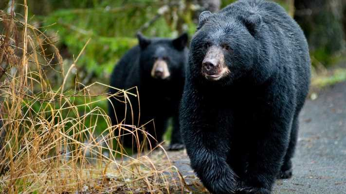 'A remarkable lady': Missing Alaska woman found alive after reporting she was charged by bears