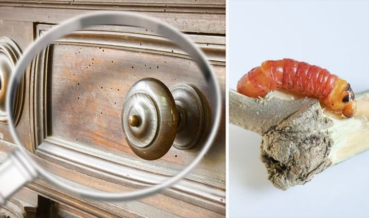 How to kill woodworm – top tips to prevent and remove woodworm
