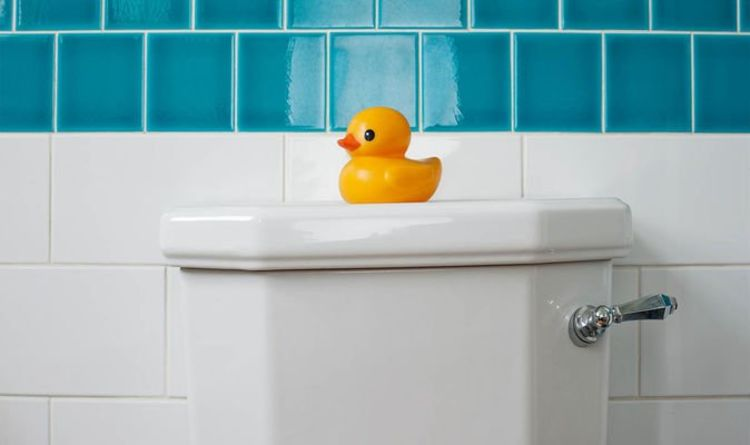 How to unblock a toilet – expert tips for solving home blockages