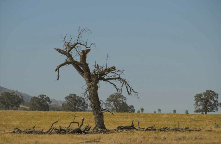 Nearly 30% of tree species in the wild are threatened with extinction, new report says