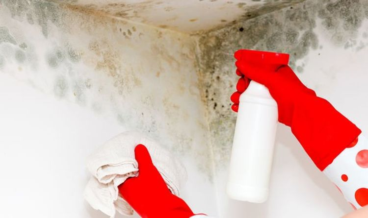 Cleaning experts share how to clean mould and stop spores 'spreading to other rooms'