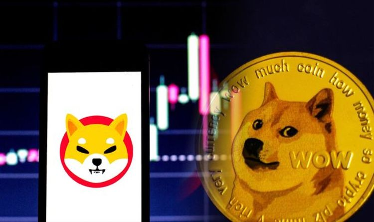 Shiba Inu coin price: SHIB skyrockets 235% – but what is the price of the coin?